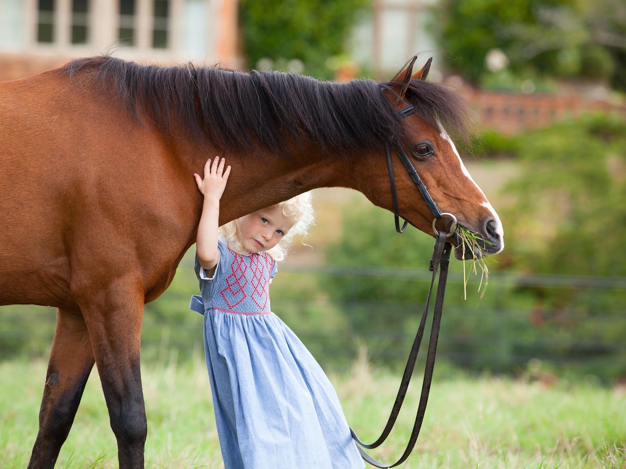 Little girl peeping under a horse