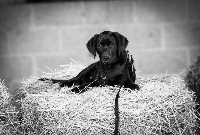 Jane Rayner photography: dog portrait session